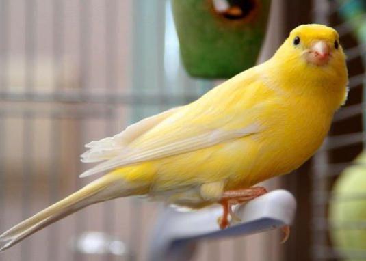 Які птахи співають?