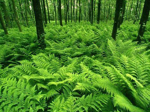 Які рослини в лісі?