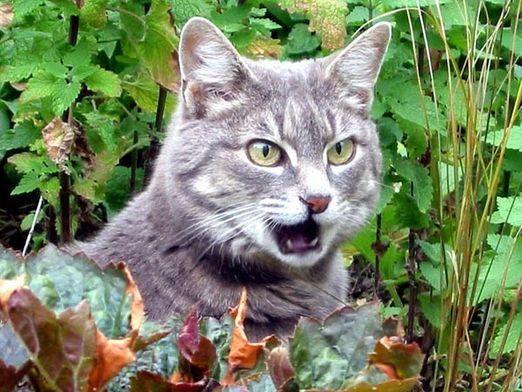 Про що говорять кішки?