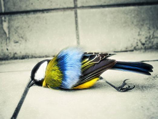 Чому гинуть і вмирають птахи?