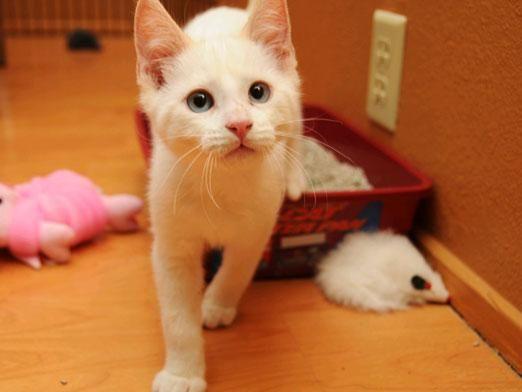 Чому кішка паскудить?