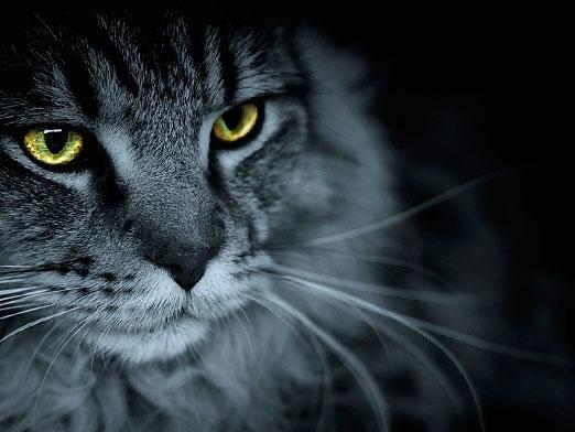 Чому кішка дивиться в очі?