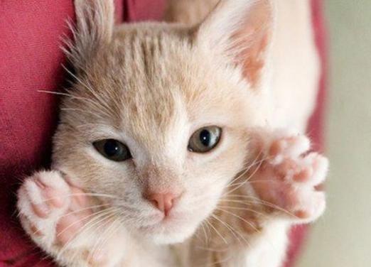 Чому кішка топче вас лапками?