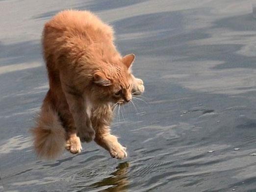 Чому кішки бояться води?