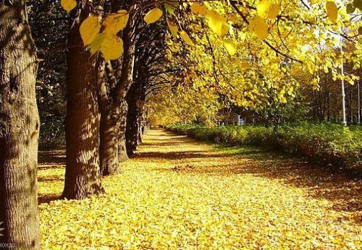 Чому опадає листя?
