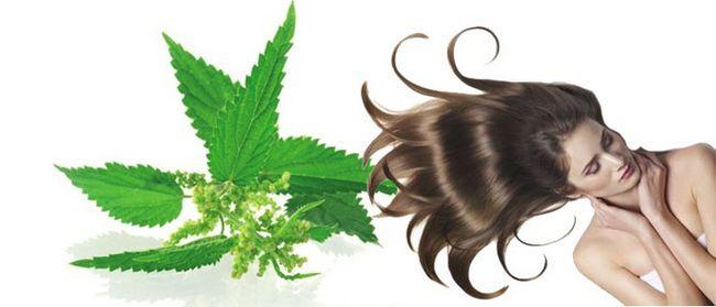 Застосування кропиви для волосся