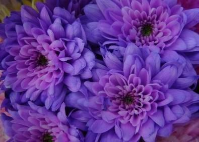 Ознака розкоші: пурпурний колір