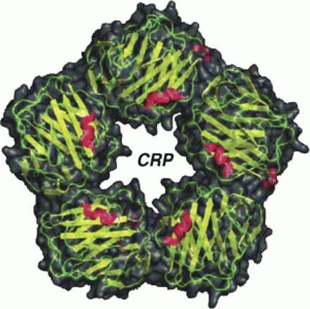 з реактивний білок норма