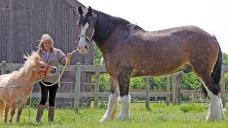 найбільша порода коней в світі