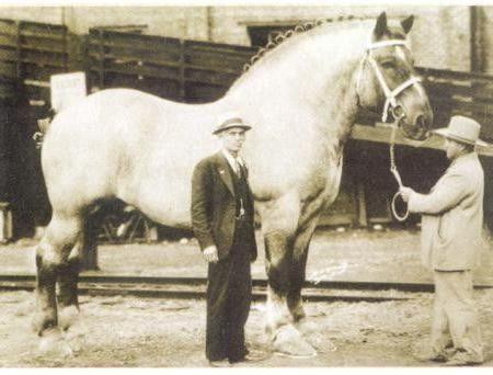 найбільша кінь у світі 1928