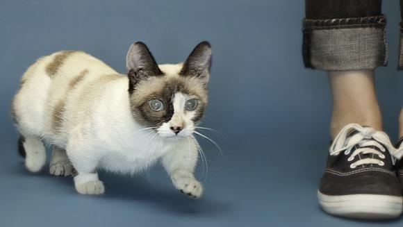 маленька кішка