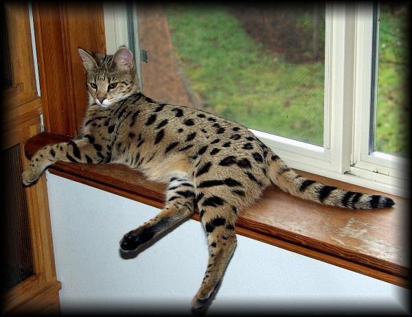 красиві кішки