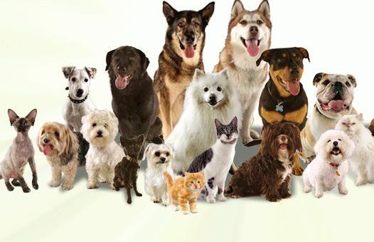 популярні породи собак