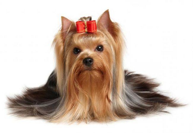 популярні породи собак з фотографіями і назвами