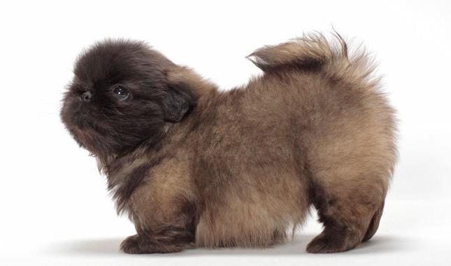 популярні породи собак в росії