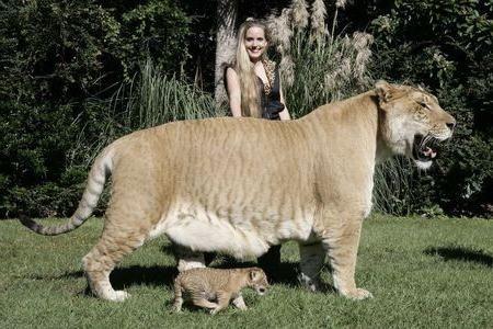 найбільший кіт