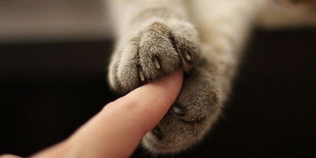 пальці у кота