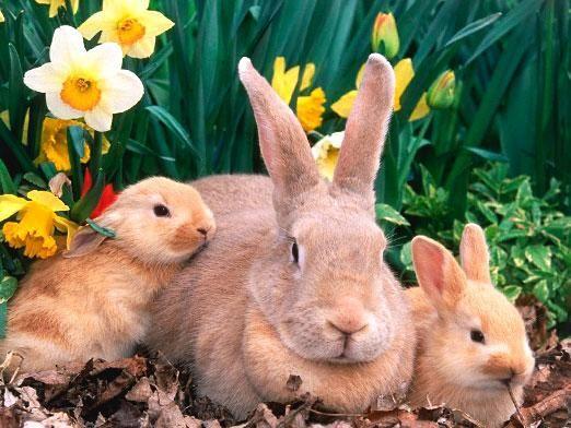 Скільки живуть кролики?